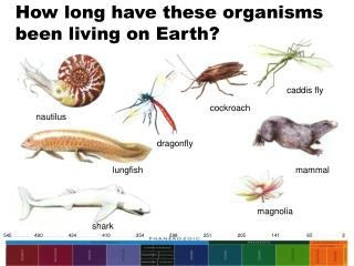 How long have these organisms been living on Earth?