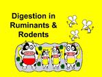 Digestion in Ruminants  Rodents