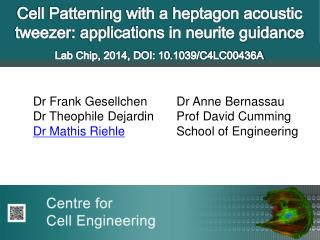 Cell Patterning with a heptagon acoustic  tweezer : applications in neurite guidance
