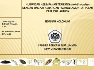 Dibimbing Oleh : Ir . Indah Riyantini,  M.Si M . Wahyudin Lewaru,  S.Pi ., M.Sc