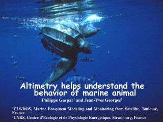 Altimetry helps understand the behavior of marine animal