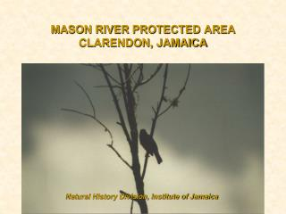 MASON RIVER PROTECTED AREA CLARENDON, JAMAICA