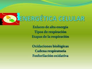 Energética celular