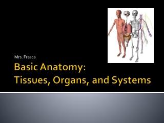 Lymphatic System aka Immune System