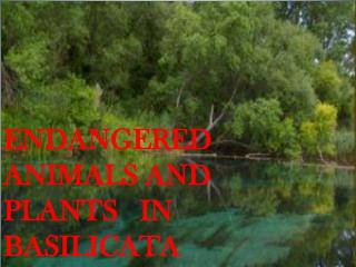 ENDANGERED   ANIMALS AND    PLANTS   IN BASILICATA