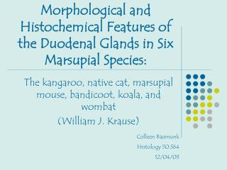 Morphological and Histochemical Features of the Duodenal Glands in Six Marsupial Species: