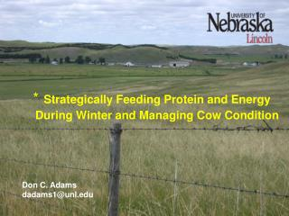 Strategically Feeding Protein and Energy During Winter and Managing Cow Condition