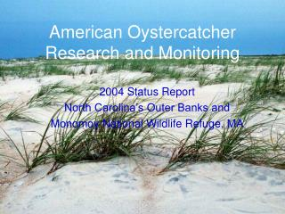 American Oystercatcher Research and Monitoring