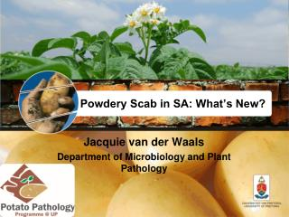 Powdery Scab in SA: What's New?