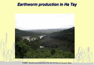 Earthworm production in Ha Tay