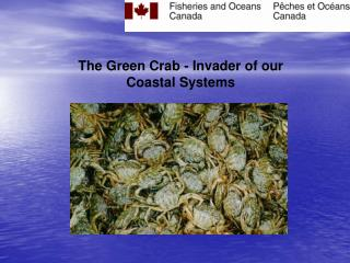 The Green Crab - Invader of our Coastal Systems