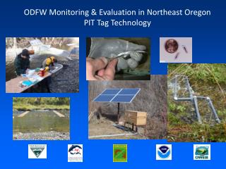 ODFW Monitoring & Evaluation in Northeast Oregon PIT Tag Technology