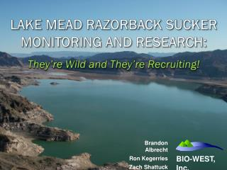 LAKE MEAD RAZORBACK SUCKER MONITORING AND RESEARCH:  They're Wild and They're Recruiting!