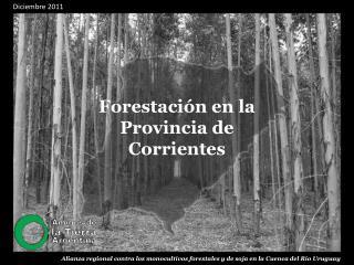 Forestación en la Provincia de Corrientes