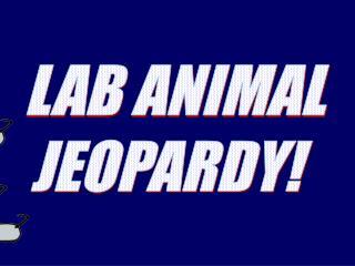 LAB ANIMAL   JEOPARDY!