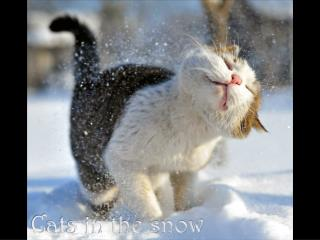 Cats in the snow