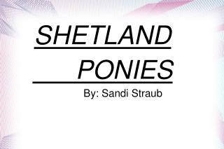 SHETLAND          PONIES               By: Sandi Straub