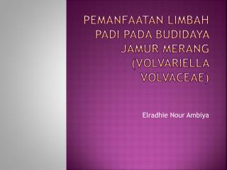 Pemanfaatan Limbah Padi Pada Budidaya Jamur Merang ( Volvariella volvaceae )