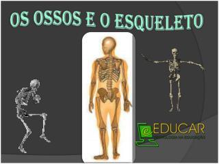 Os ossos e o esqueleto