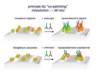 """principe du """"co-patching"""" (résolution : ~ 50 nm)"""