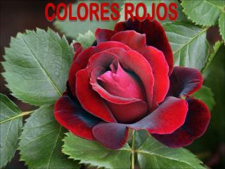 COLORES ROJOS