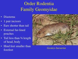 Order Rodentia Family Geomyidae