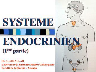 SYSTEME ENDOCRINIEN (1 ère  partie)