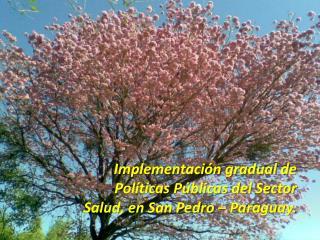 Implementación gradual de Políticas Públicas del Sector Salud, en San Pedro – Paraguay.