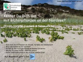 Kennst Du Dich aus  mit Blütenpflanzen an der Nordsee? (Teil 1: Strand, Vordüne & Salzmarsch)