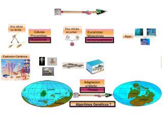 Células Procariotas: Mutaciones