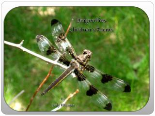 Dragonflies  Children's Poems