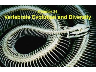 Vertebrates Fishes, Amphibians, Birds, Reptiles, Mammals