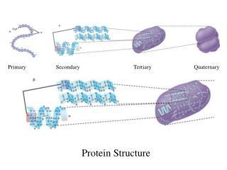 Primary                     Secondary                                      Tertiary                              Quatern