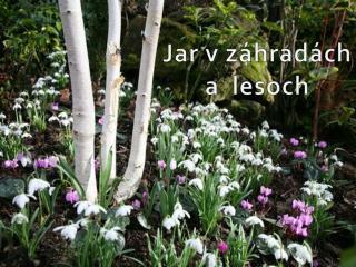Jar v záhradách a   lesoch