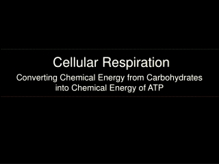 How Cells Release  Stored Energy   Cellular Respiration