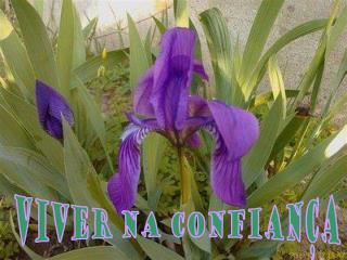 VIVER NA CONFIANÇA