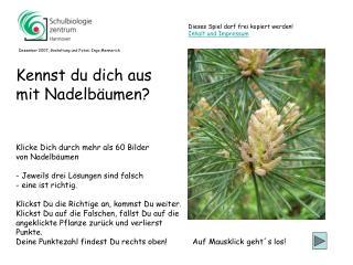Klicke Dich durch mehr als 60 Bilder  von Nadelbäumen - Jeweils drei Lösungen sind falsch