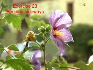 Exercise 23 Bending sideways