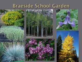 Braeside School Garden