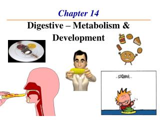 Chapter 14  Digestive   Metabolism  Development
