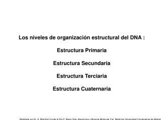 Los niveles de organización estructural del DNA : Estructura Primaria Estructura Secundaria