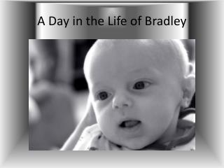A Day in the Life of Bradley