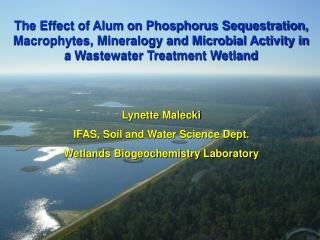 Lynette Malecki IFAS, Soil and Water Science Dept. Wetlands Biogeochemistry Laboratory
