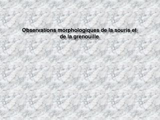 Observations morphologiques de la souris et de la grenouille