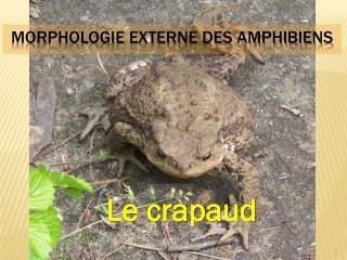 Morphologie externe des amphibiens