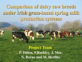 Comparison of dairy cow breeds under Irish grass-based spring milk production systems