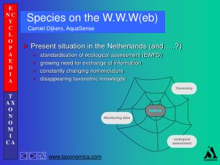 Species on the W.W.W(eb)