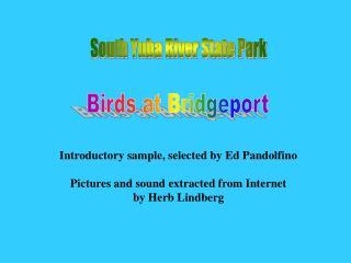 Birds at Bridgeport