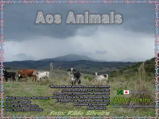 Aos Animais