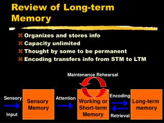 Review of Long-term Memory